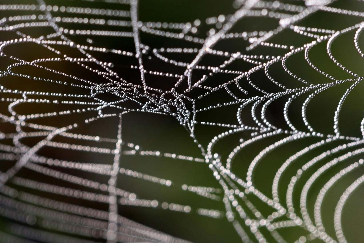 spider web covered with morning dew