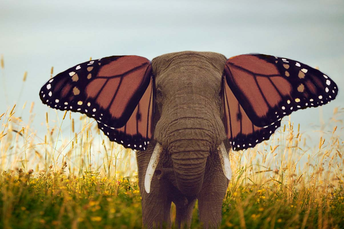 elephant with butterfly wings for ears
