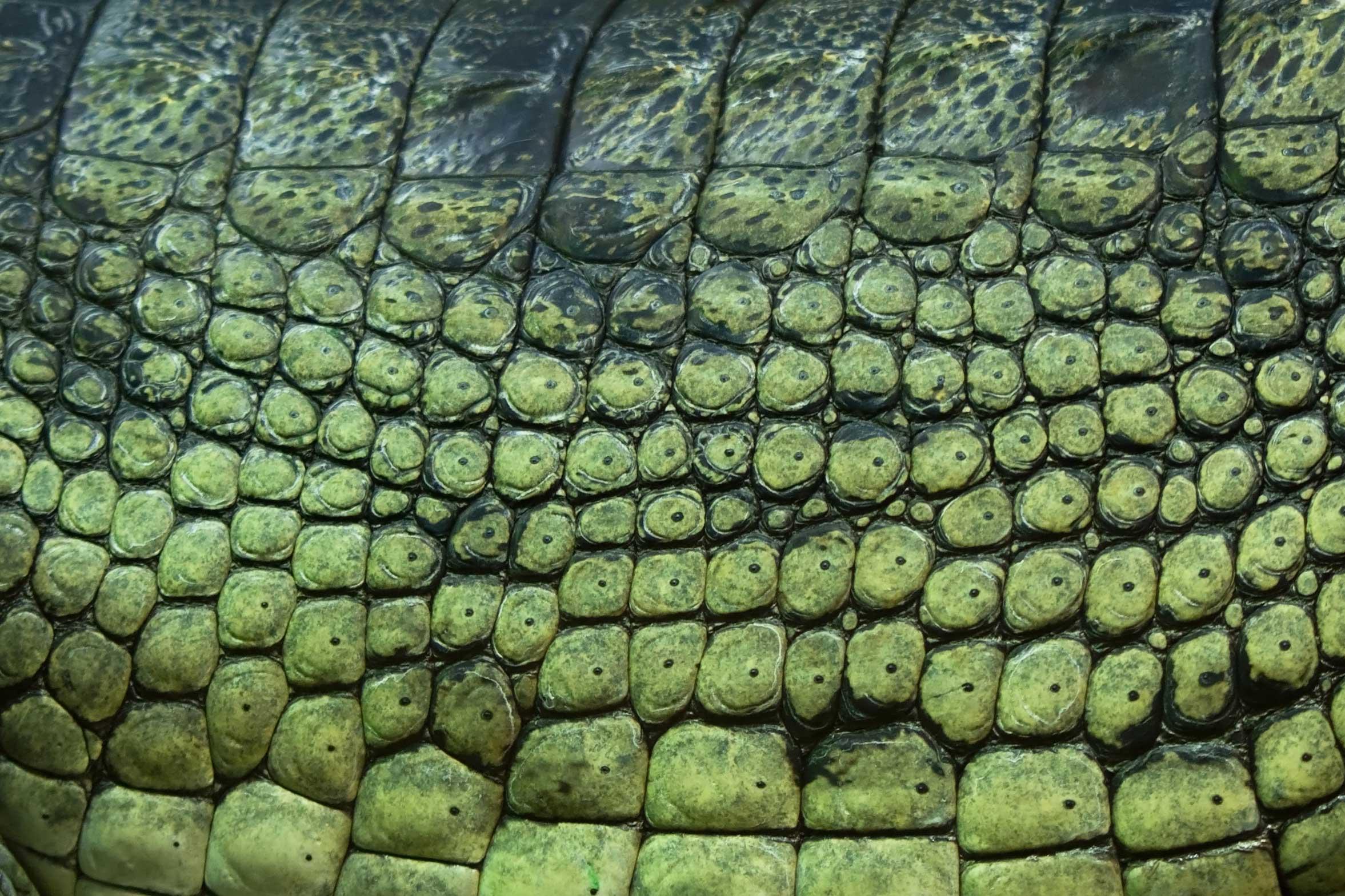 scaly reptile skin