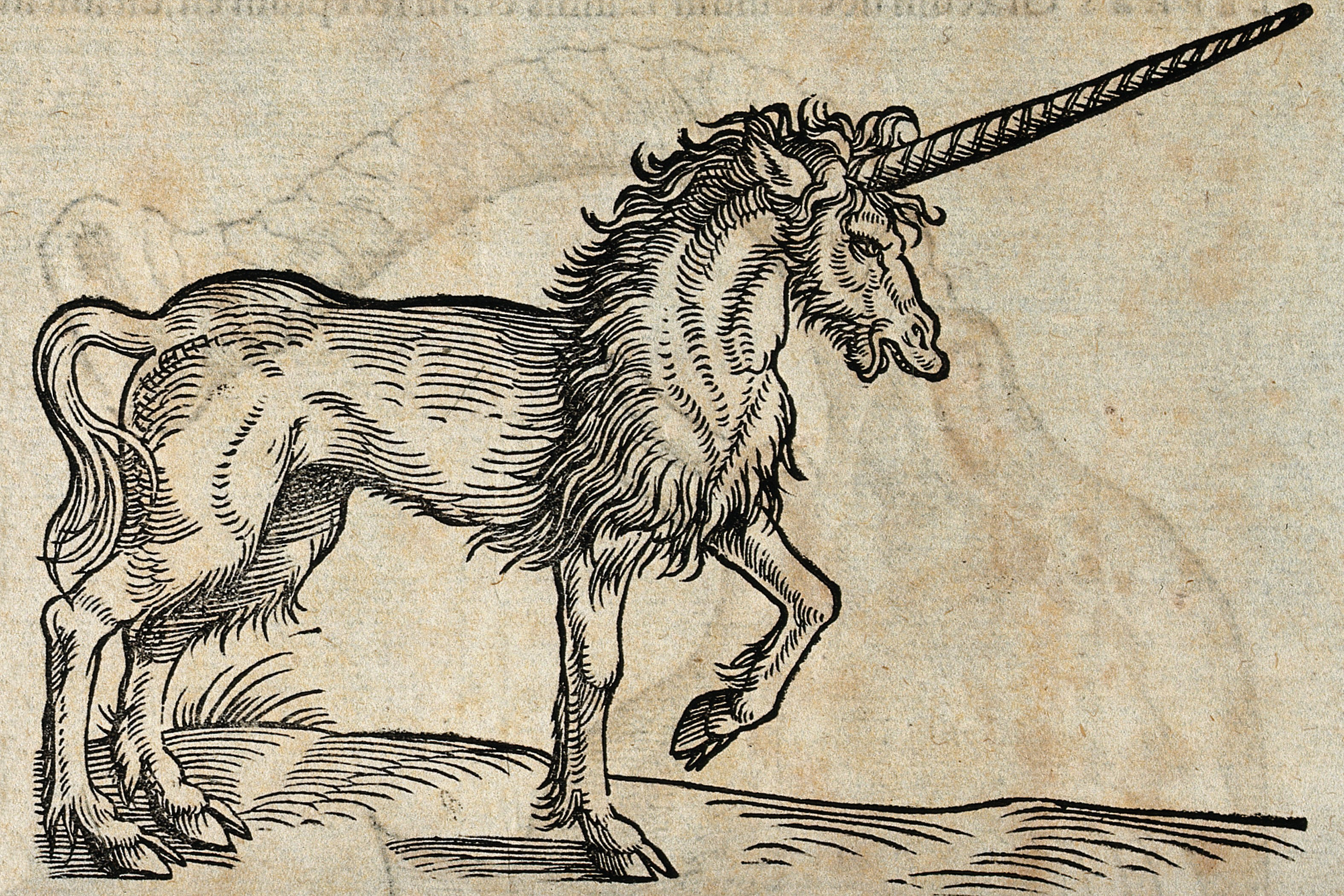 A 14th century woodcut depicting a unicorn with a very long horn, the tail of a cat, and goat-like feet.