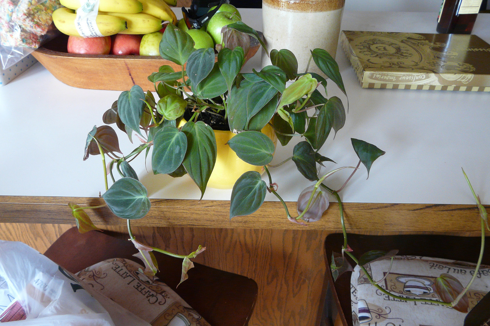 a Philodendron plant in a yellow pot on a white table. Behind it is a bowl of fruit, a canister, and what appears to be a box of chocolate.