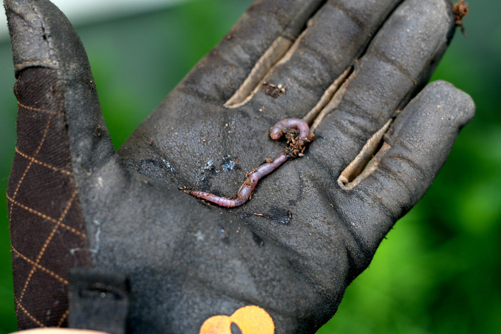 a close-up image of a gardener's glove. In the center of it is an earthworm.