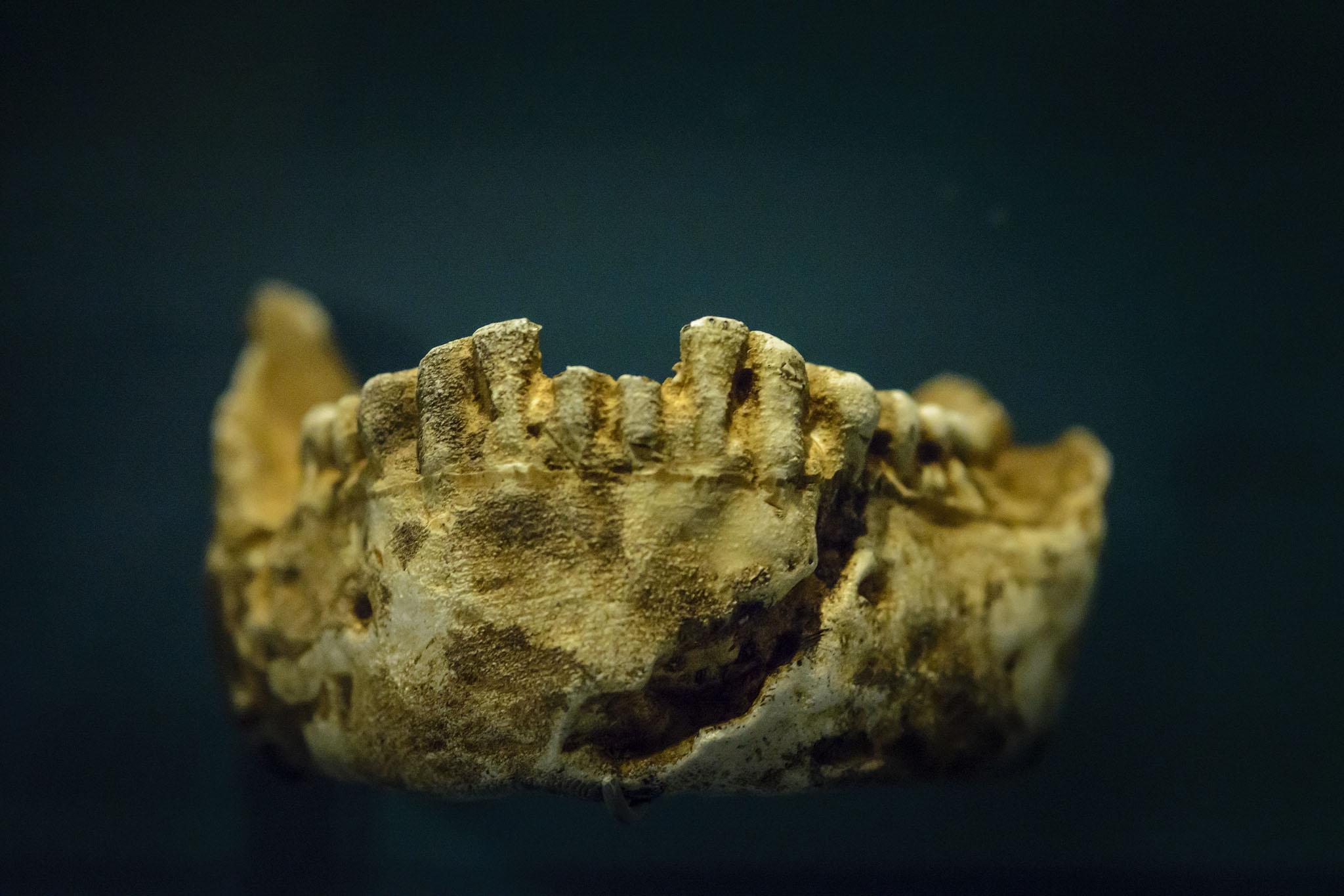 a jawbone fragment of a homo naledi skull