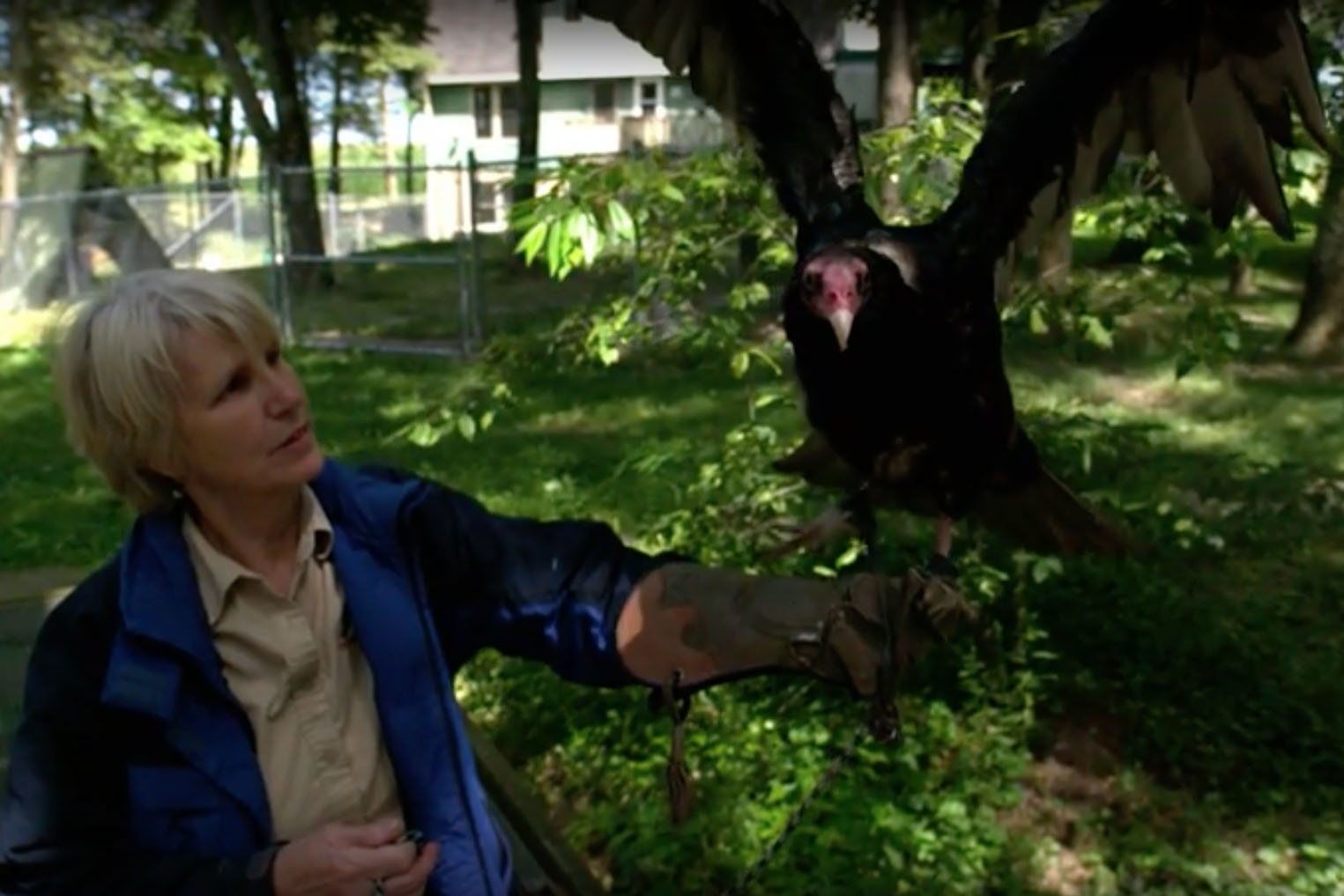woman with turkey vulture
