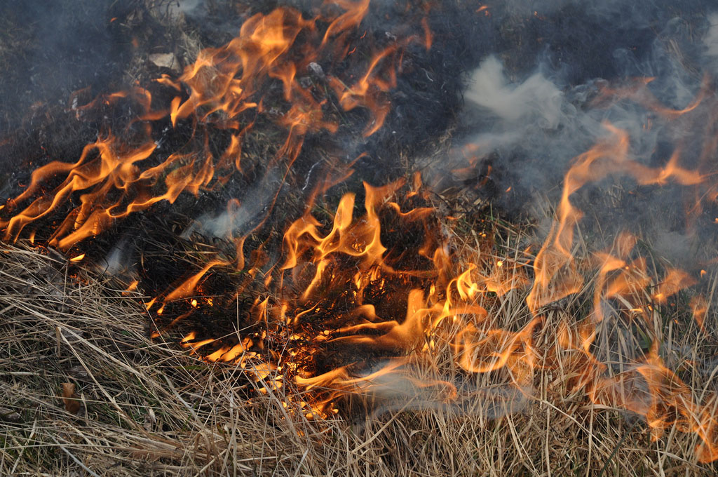 A small fire on a meadow