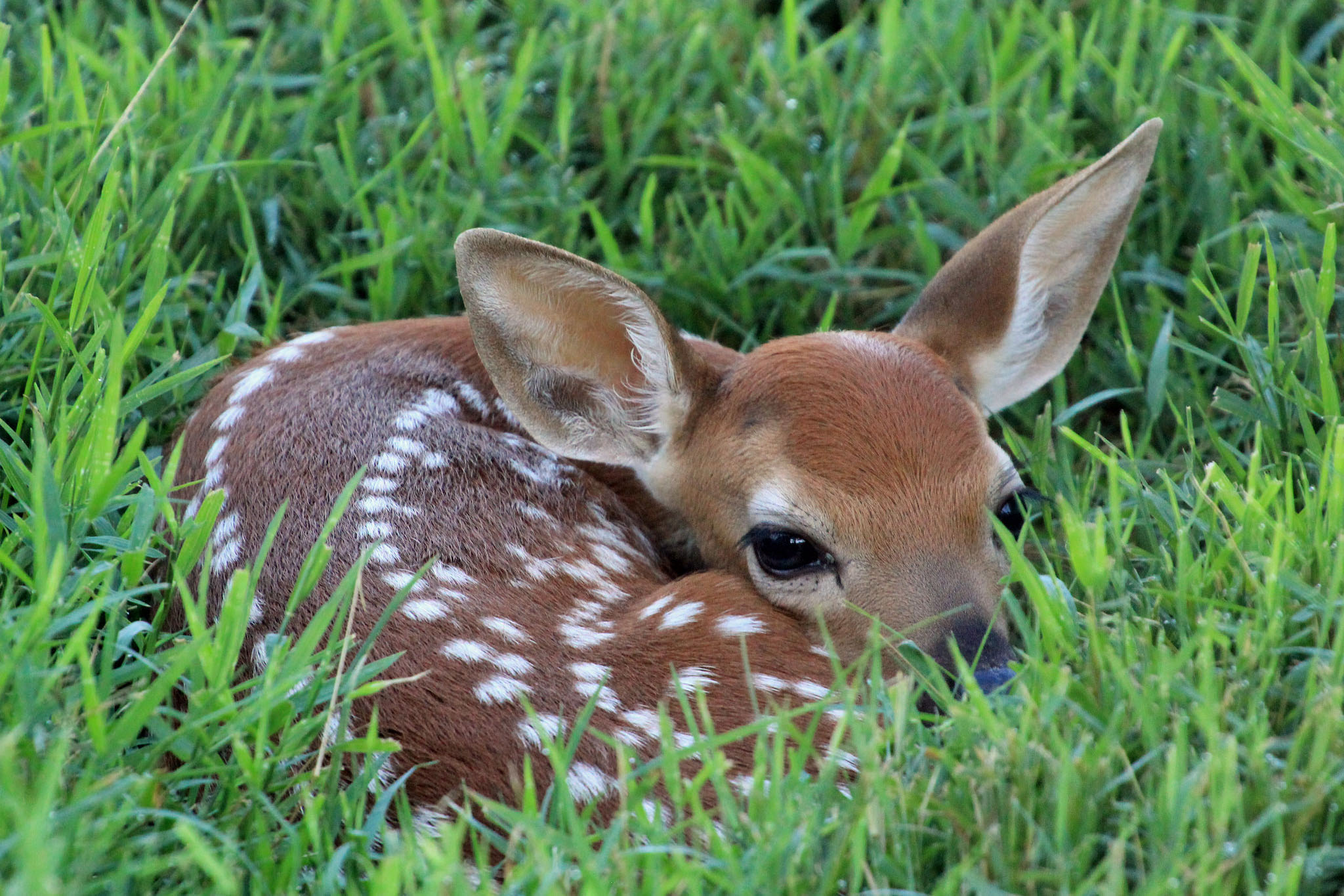 Don't Touch That Fawn | A Moment of Science - Indiana Public Media