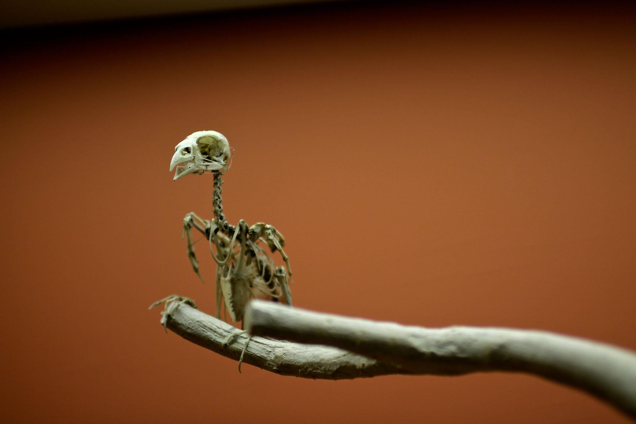 A bird's skeleton (rio, Flickr)