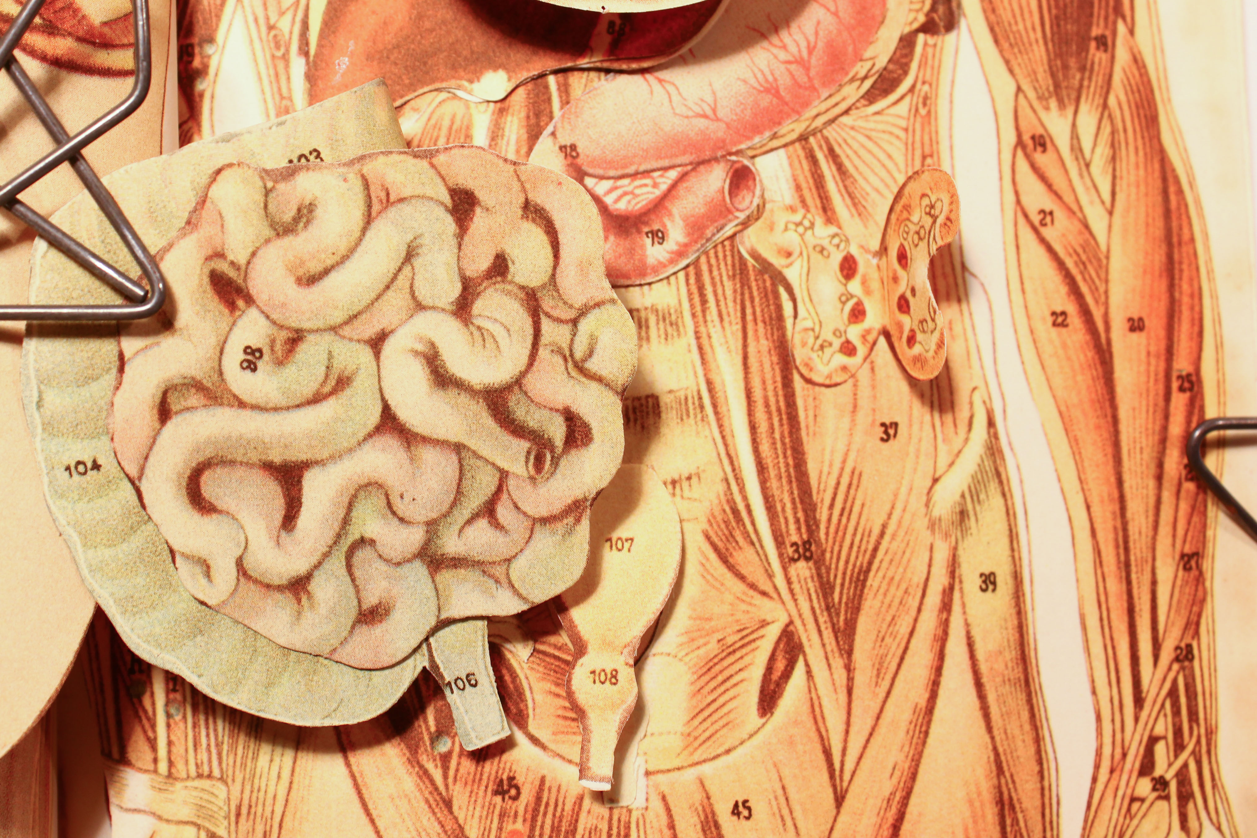 A close-up image of a diagram of a human male digestive system. (lungstruck, Flickr)