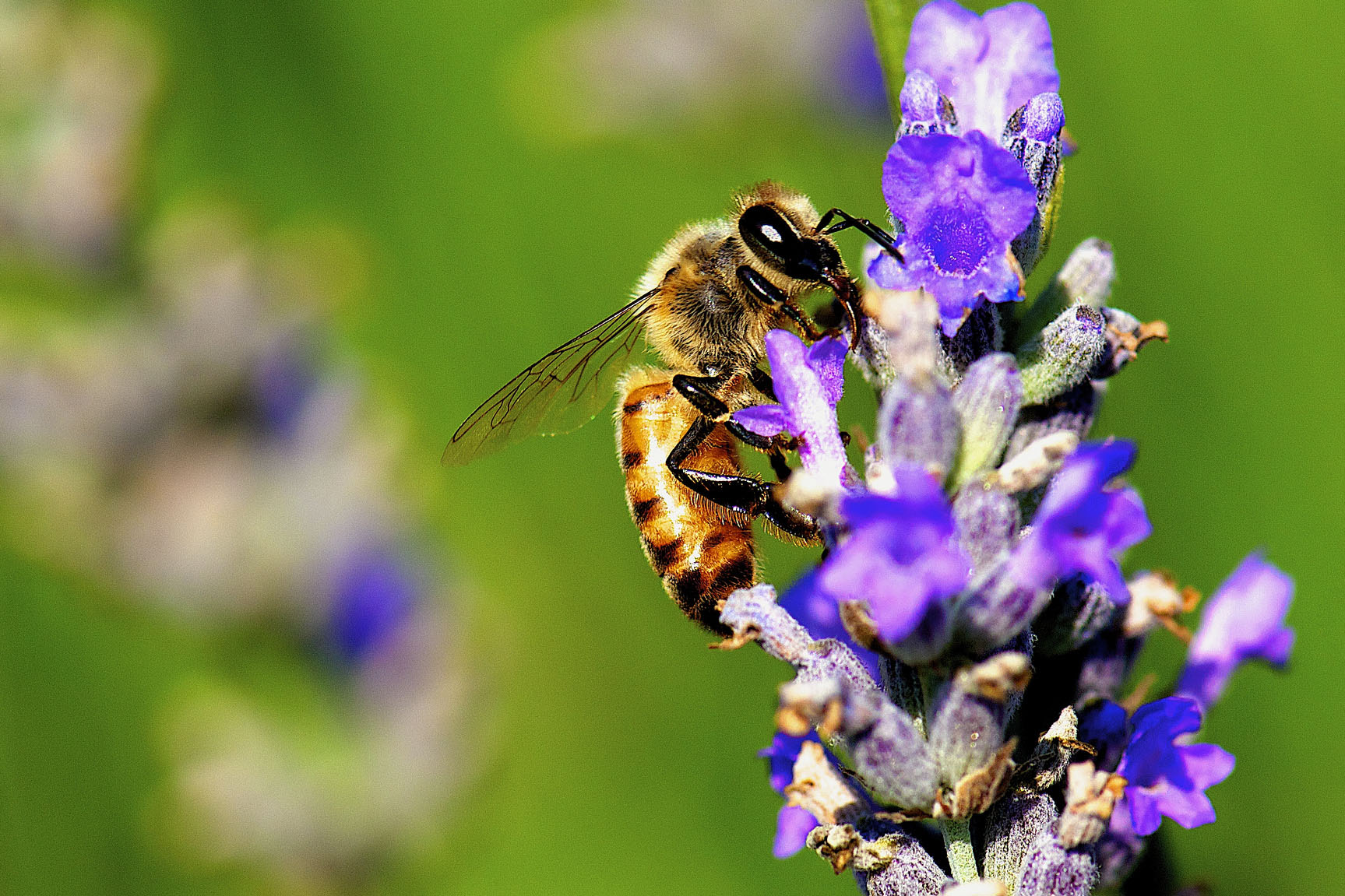 Bees can learn how to assess numerical value. (Danny Perez Photography, Flickr)