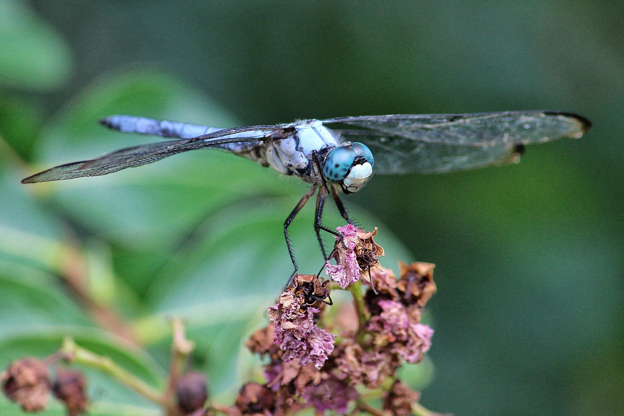 A dragonfly (Mary Moschell, Flickr).