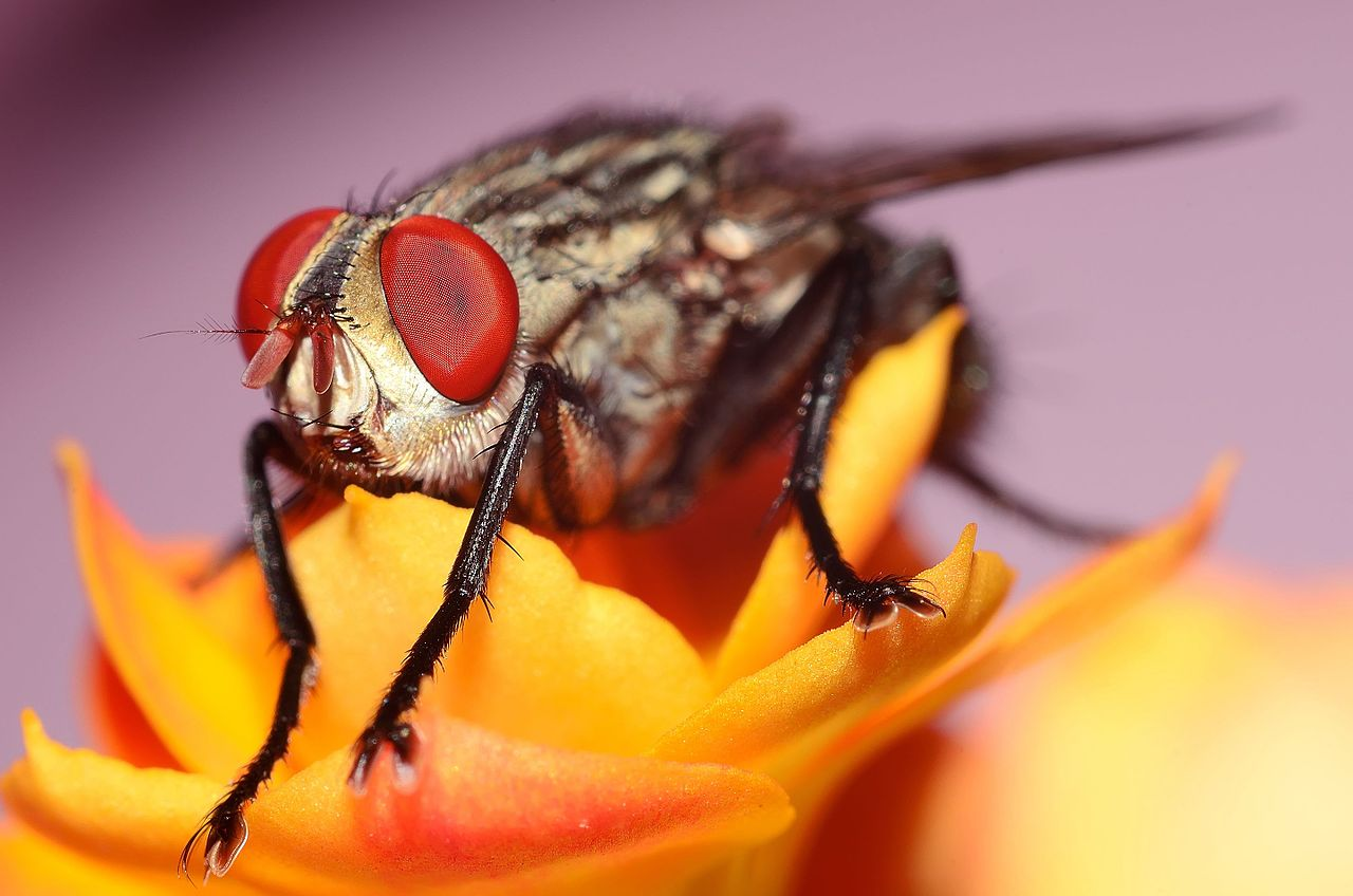Flies see the world very differently than humans do.
