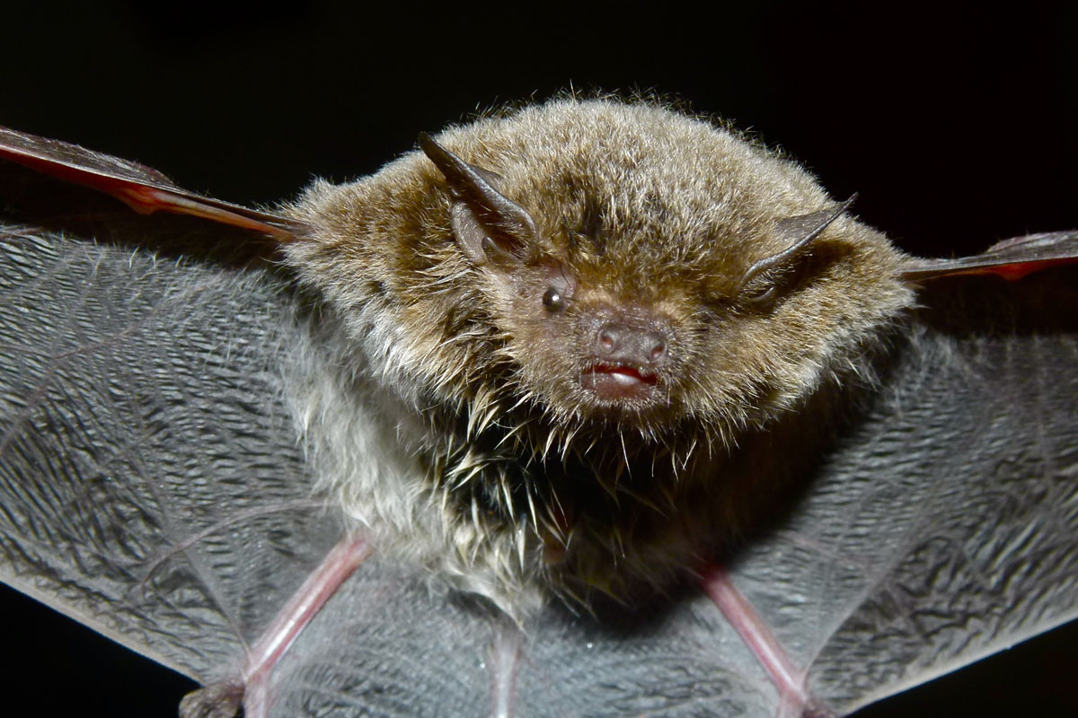Bats use echolocation to find their way around. Some humans use this same ability.