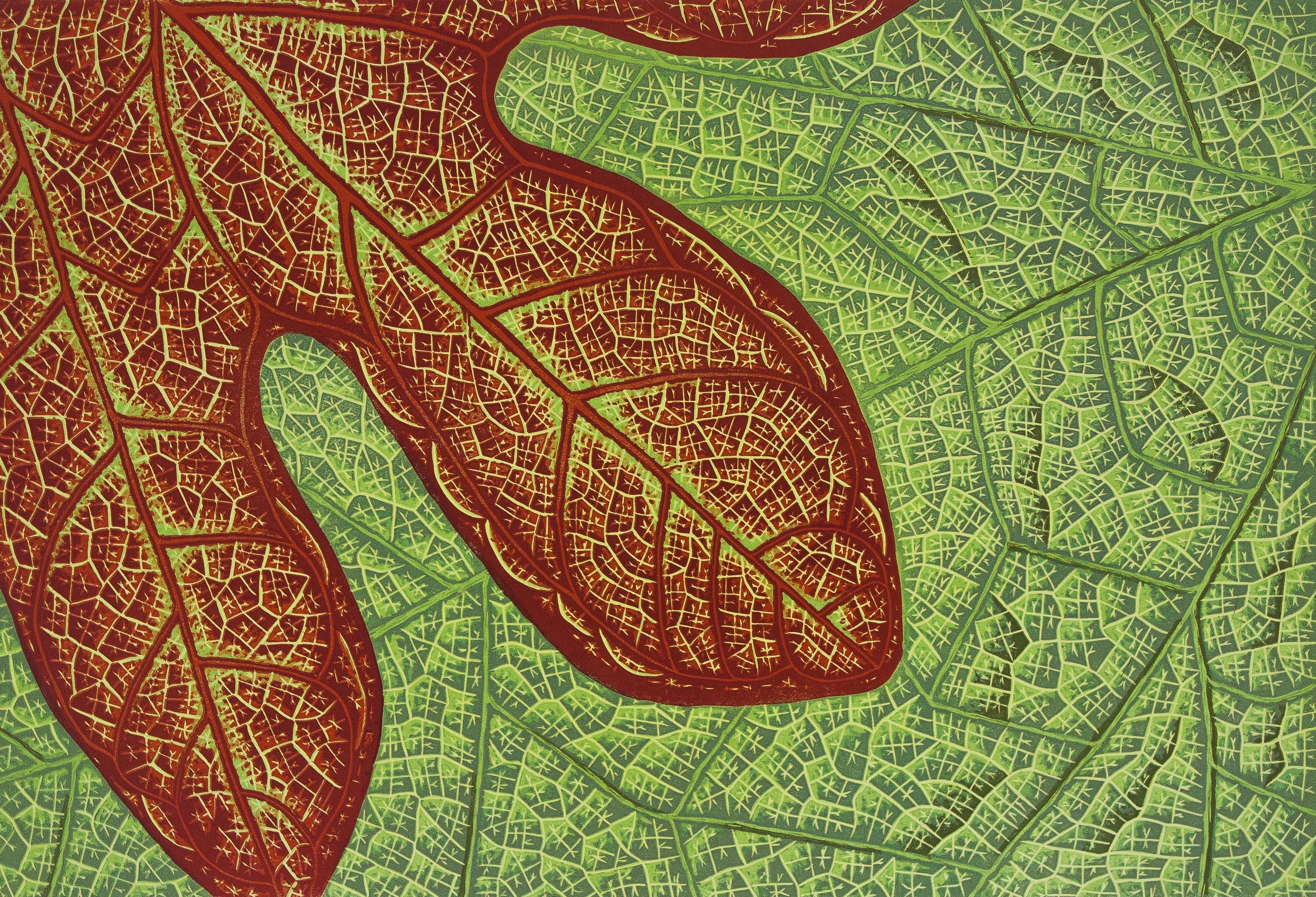 close-up leaf forms