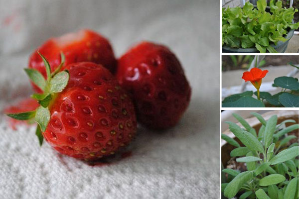 strawberries and other plants