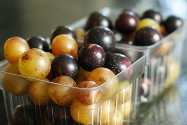 muscadines and scuppernongs
