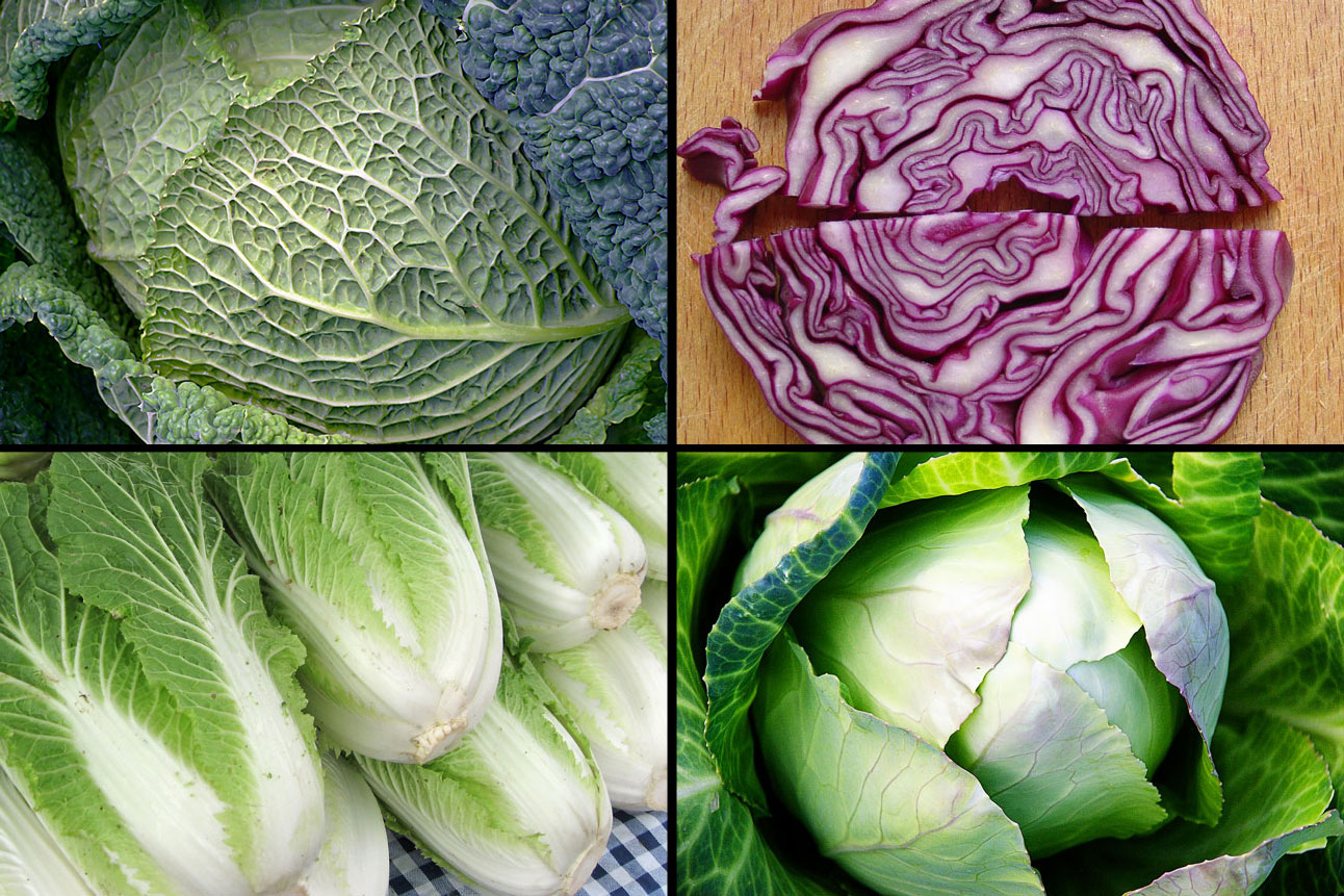 Four Varieties Of Cabbage