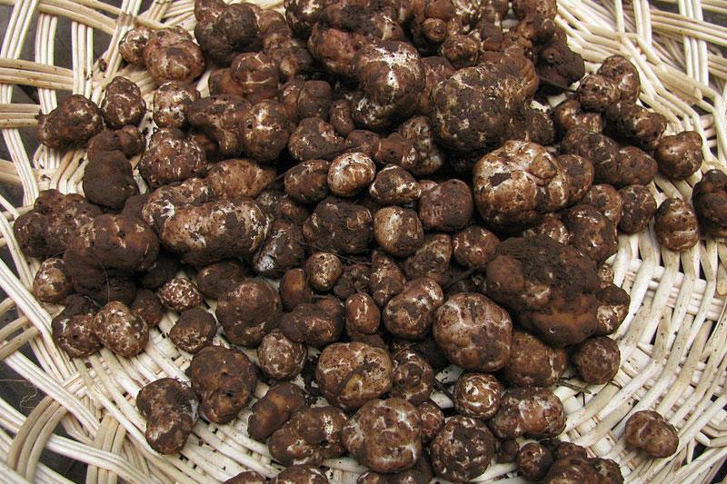 basket full of truffles