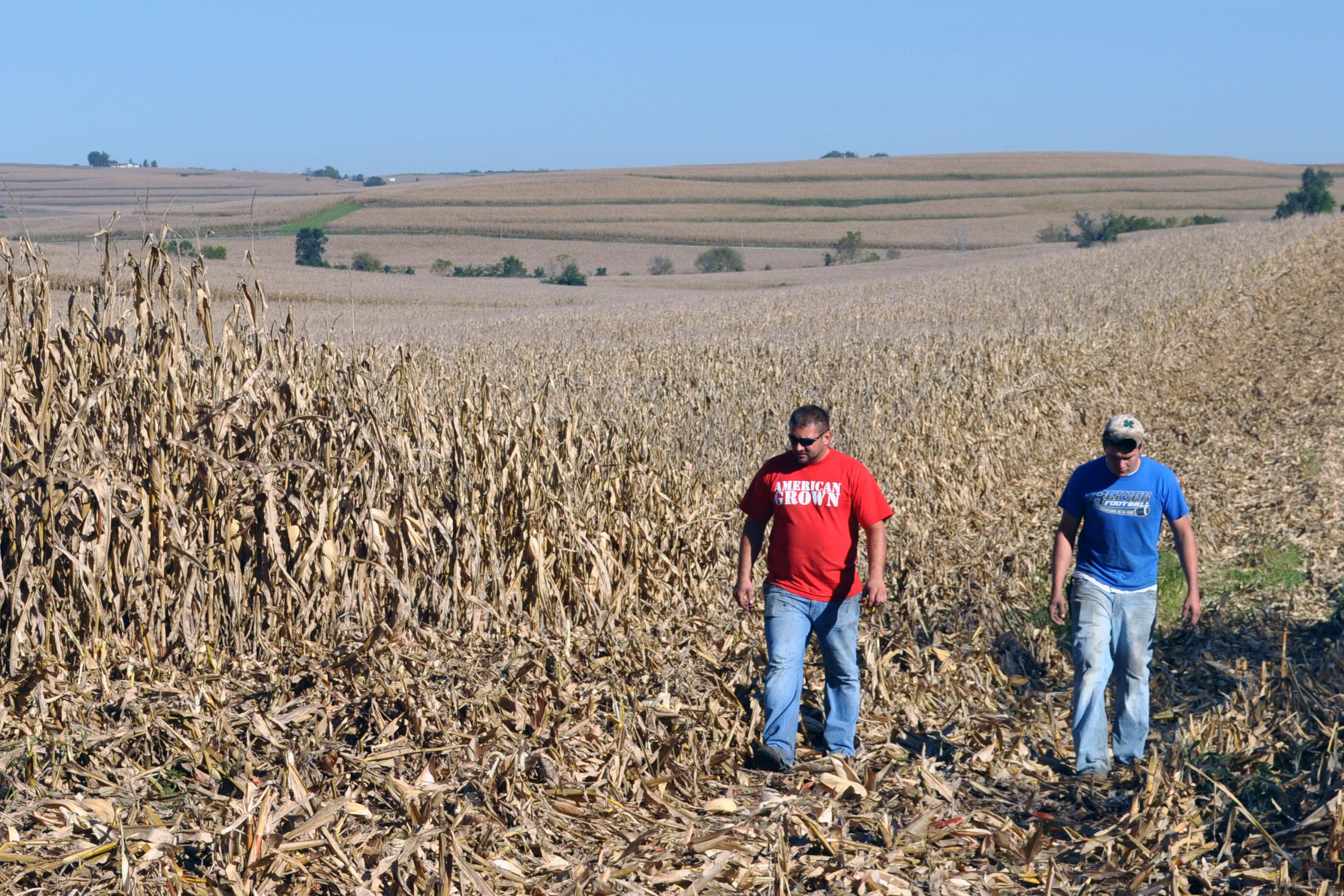 farmers walking in corn field