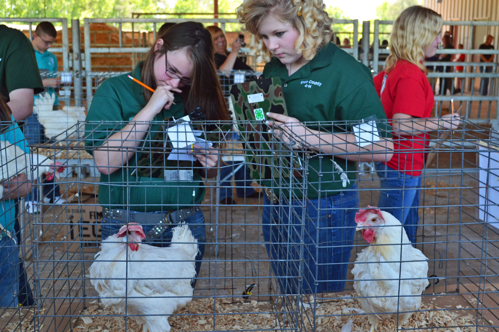 2012 Crawford Area Poultry Judging Competition (Georgia)