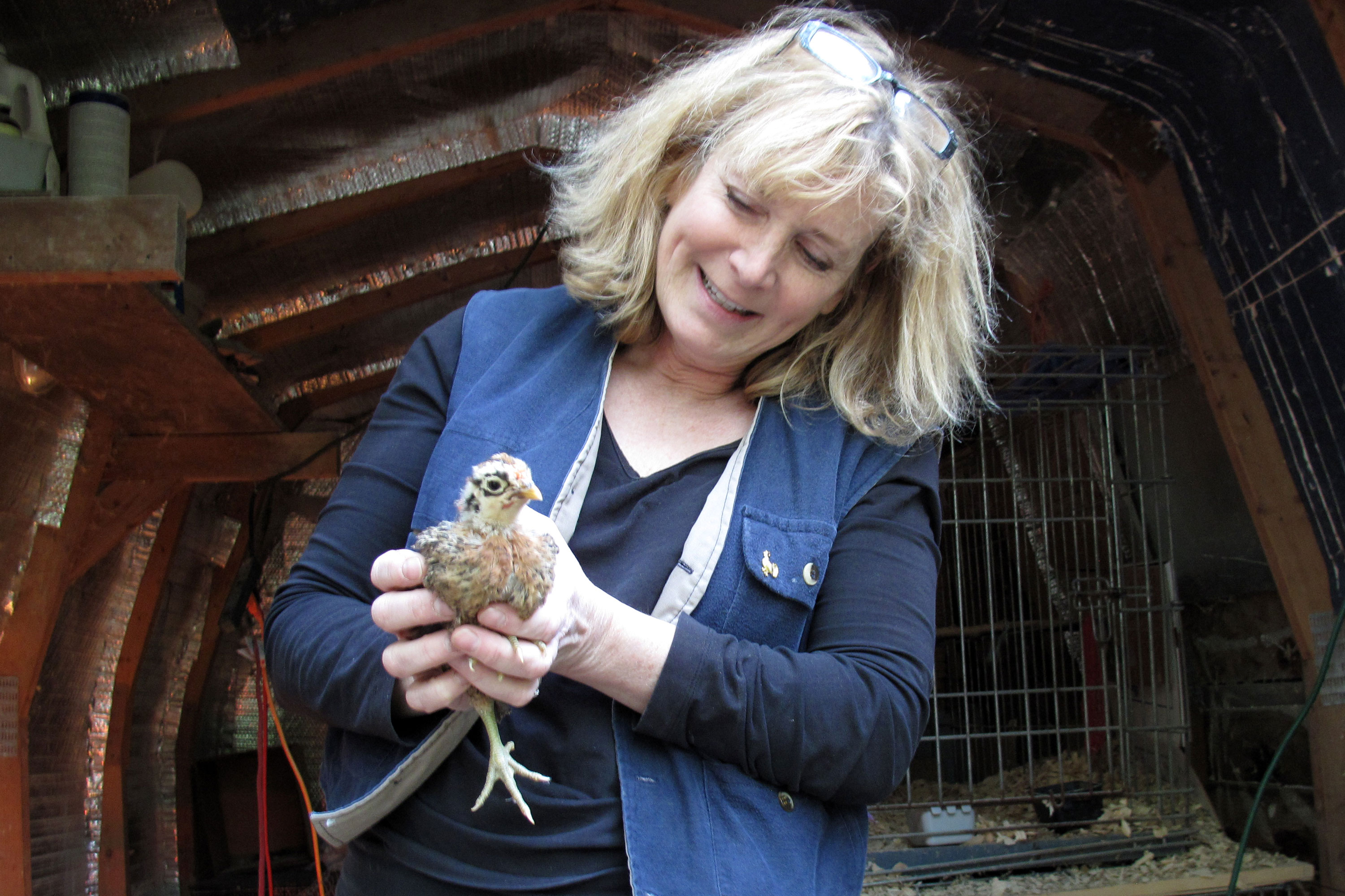 jana wilson and chick