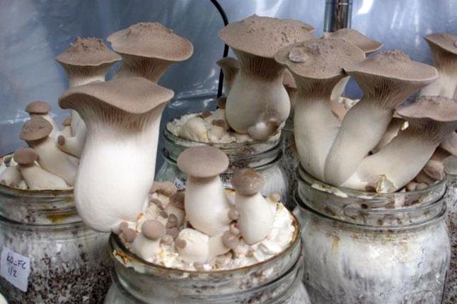 No Hunting Necessary At Brown County Fungus Farm | Earth Eats: Real Food,  Green Living - Indiana Public Media