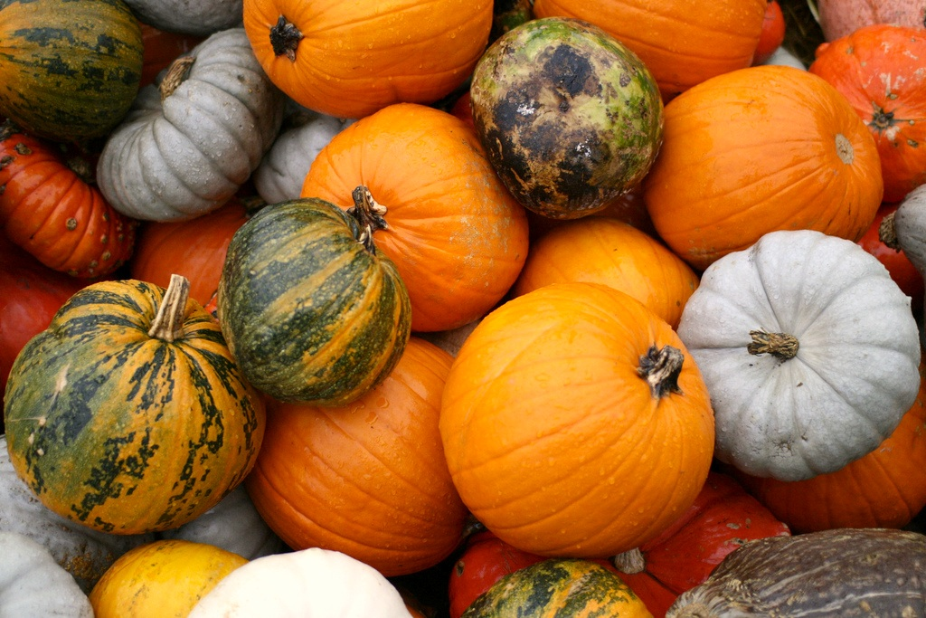 a pile of many-colored pumpkins