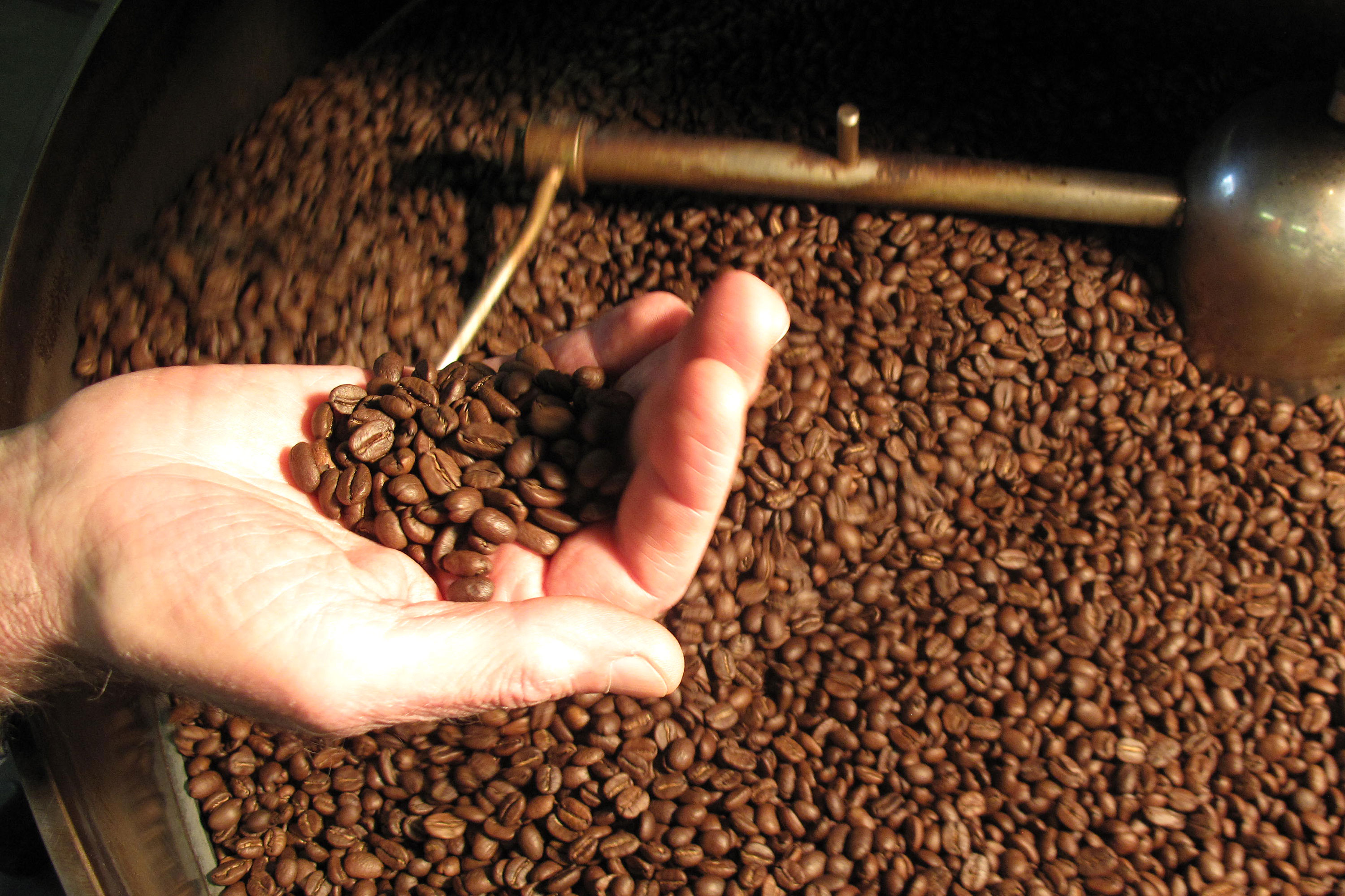 holding roasted coffee beans