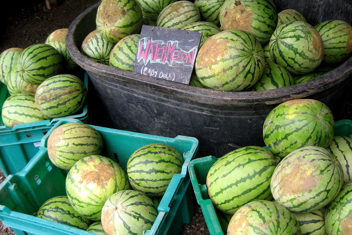 watermelons-csa