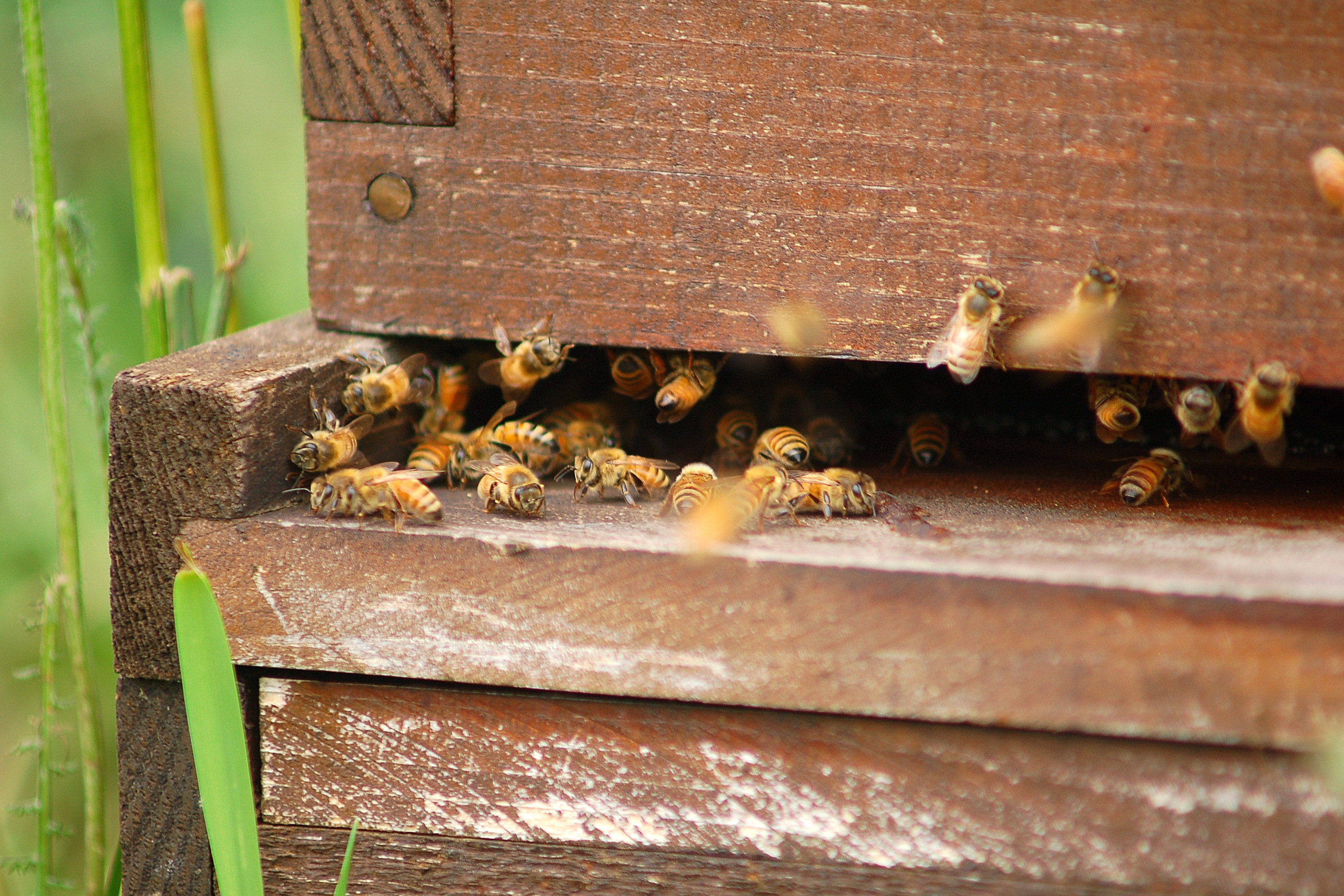 Bees gathering pollen