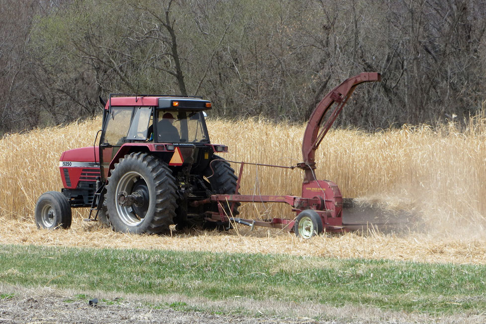 tractor plowing miscanthus