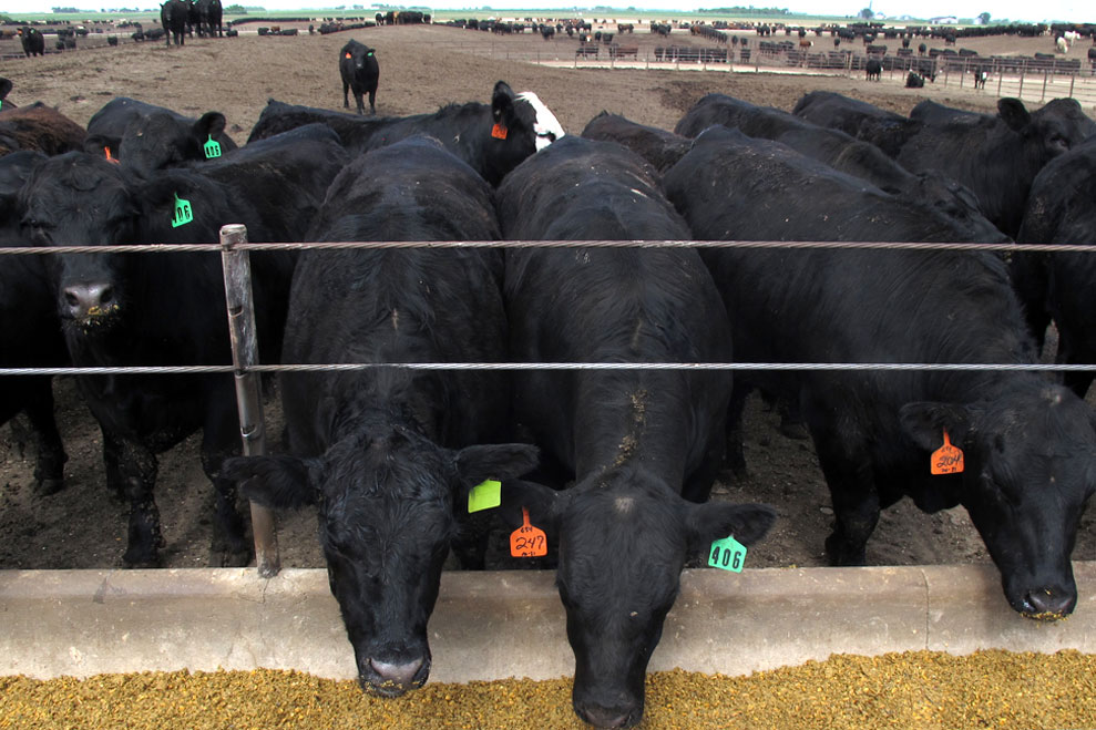 061114_beef-map-cattle-edit