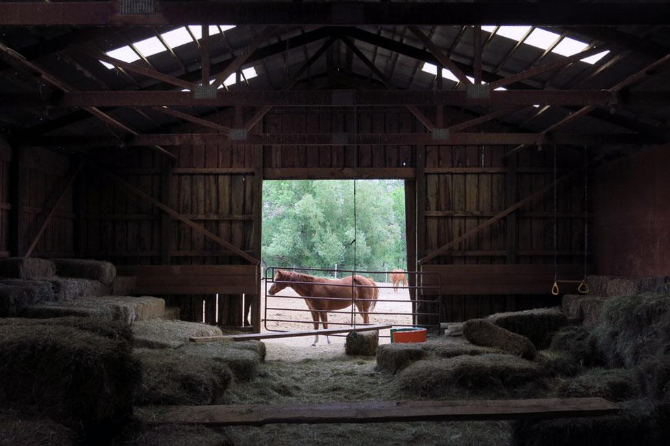 061214_agritourism-horse-edit