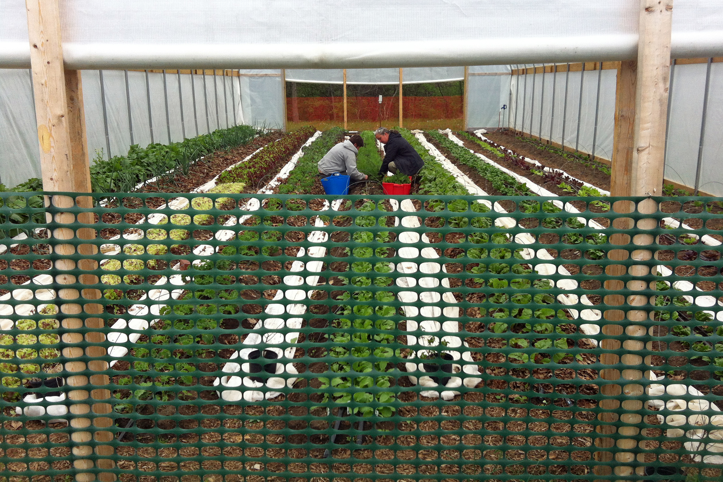 high tunnel with crops