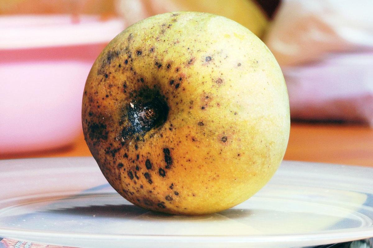 Rotten_Mango_Apple