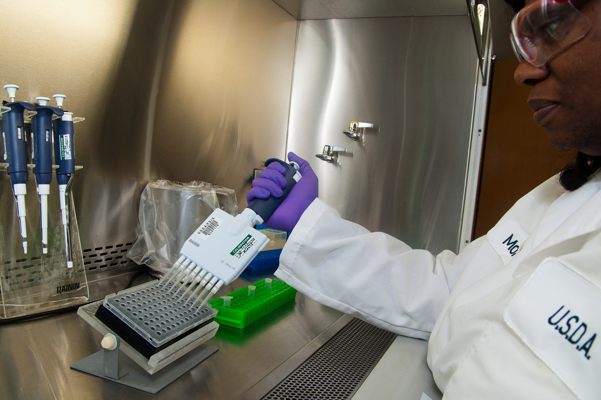 A USDA microbiologist adds reagents to test for E. coli in Athens, Georgia.