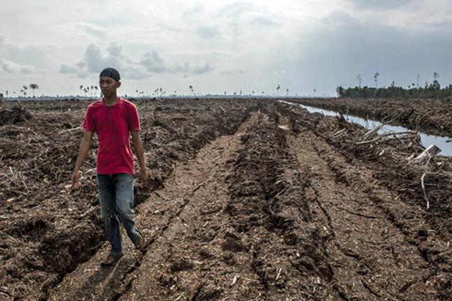 peat soil in Sumatra, Indonesia