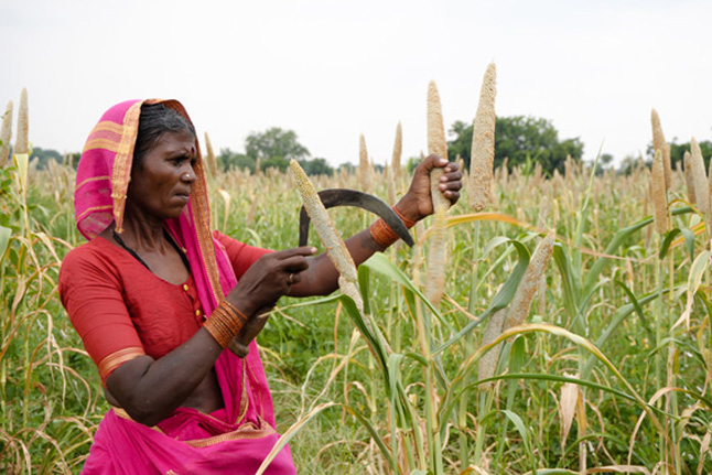 farmer with millet