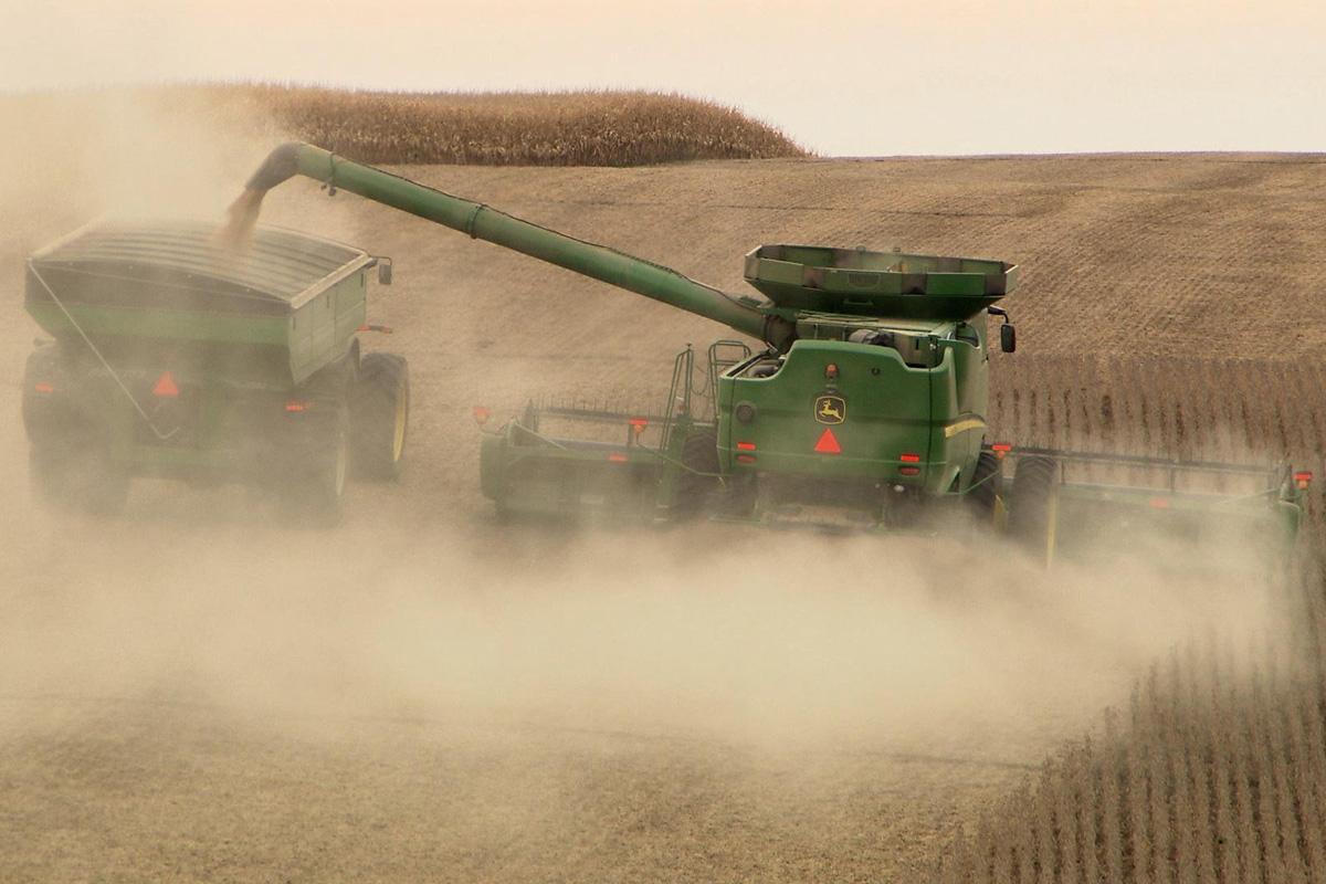 tractor in a corn field