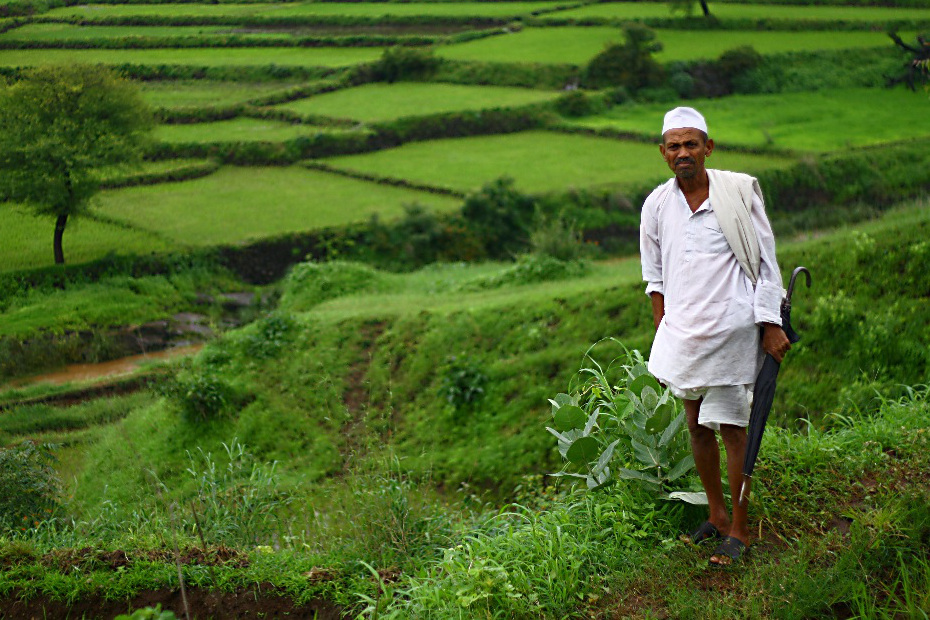 A farmer walks through a field in India