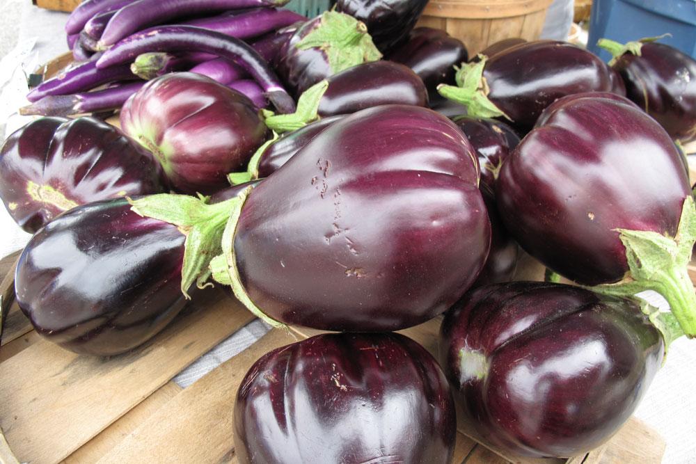 Black-Beauty-Eggplants