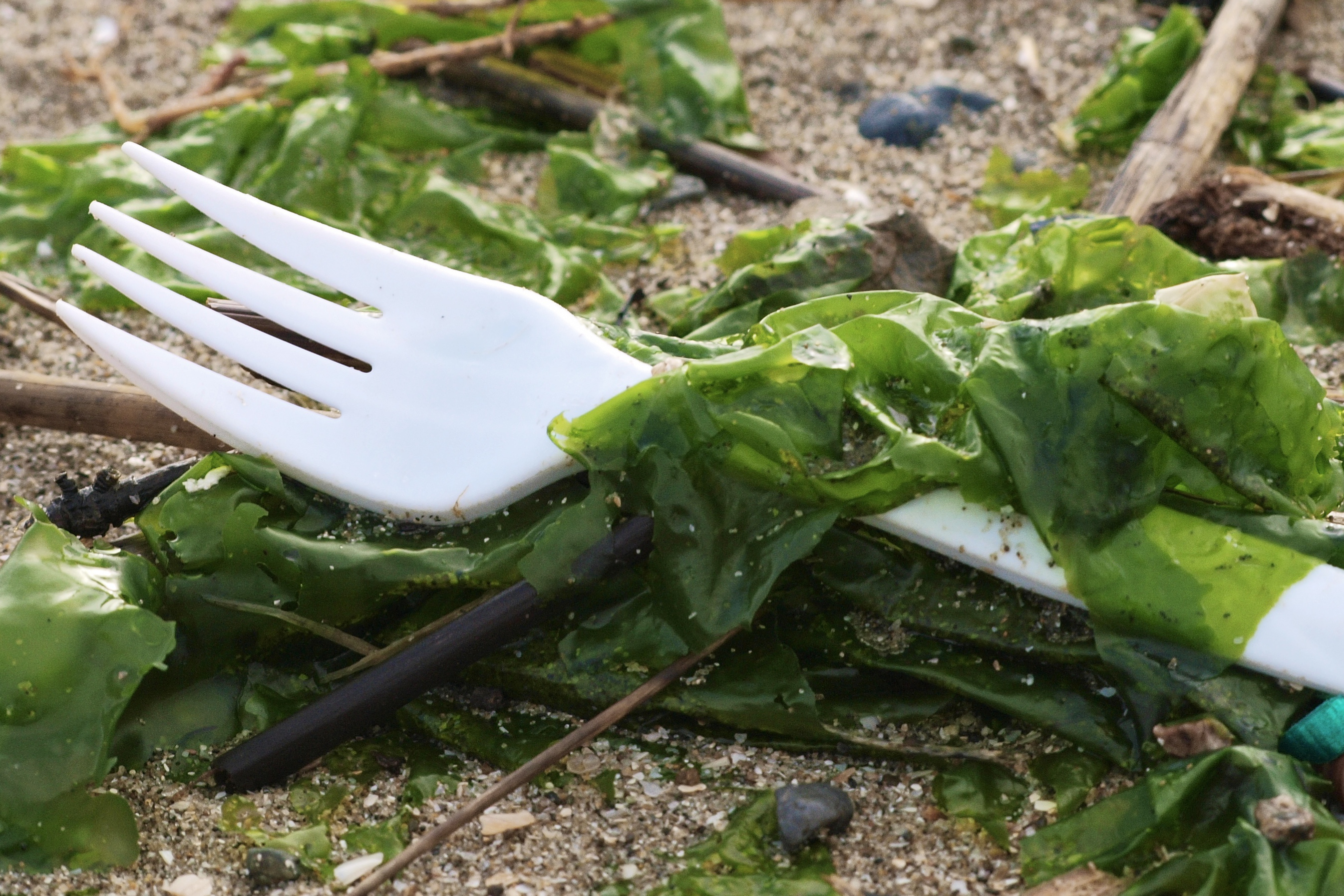 A plastic fork mingles with sand and seaweed on a beach.