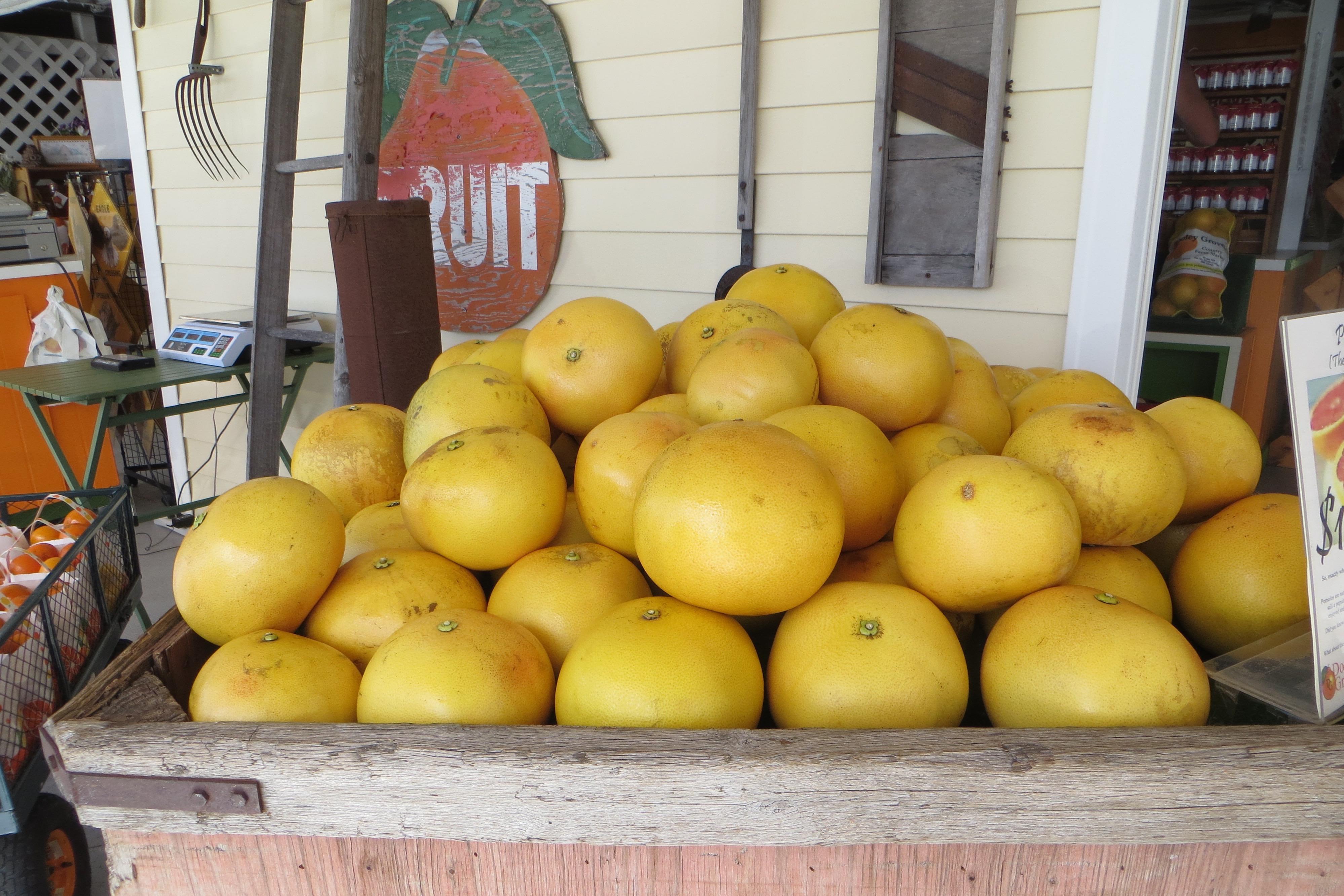 Florida grapefruit displayed at a market