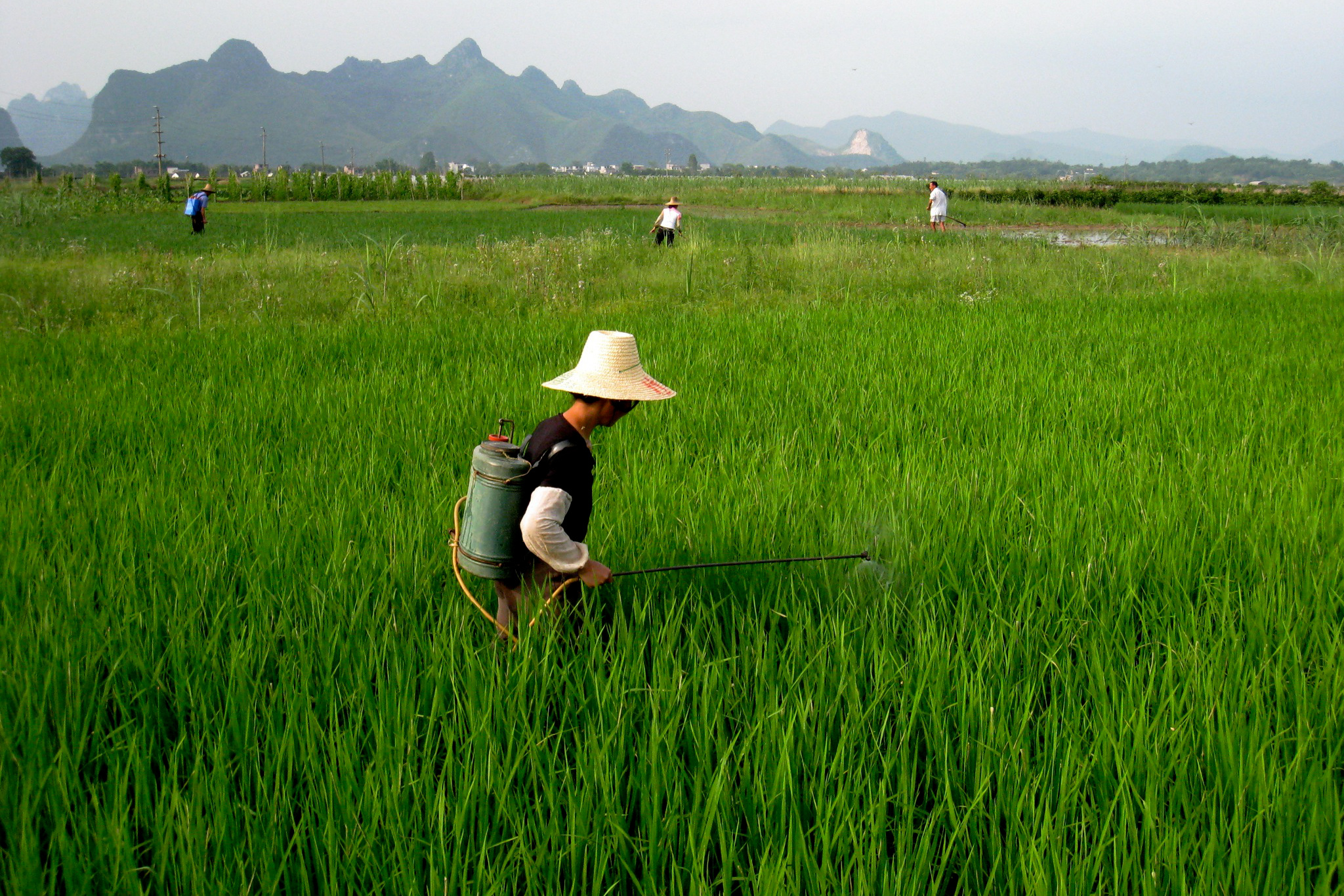 A farmer applies pesticide to a field in China