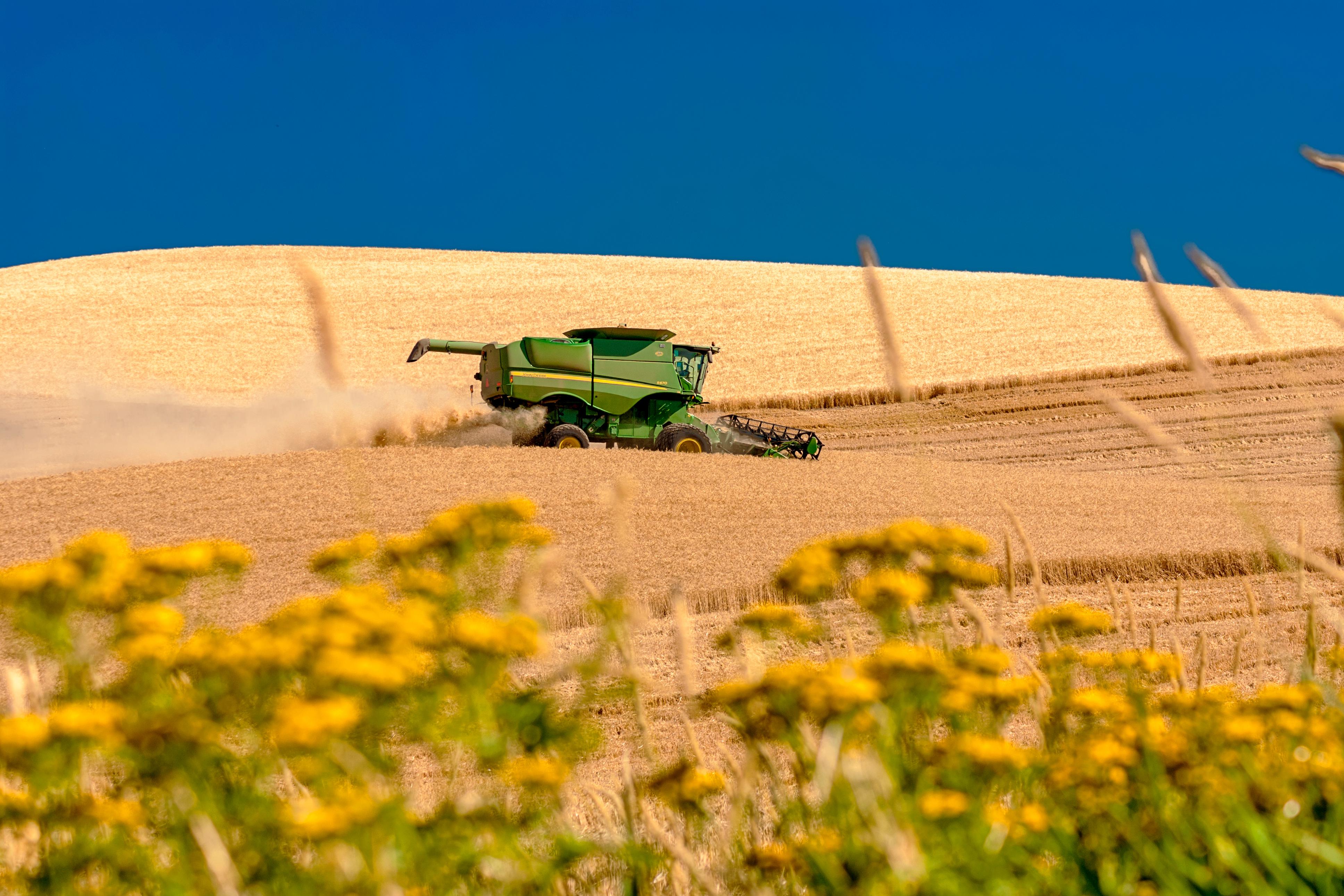 A harvester works a grain field