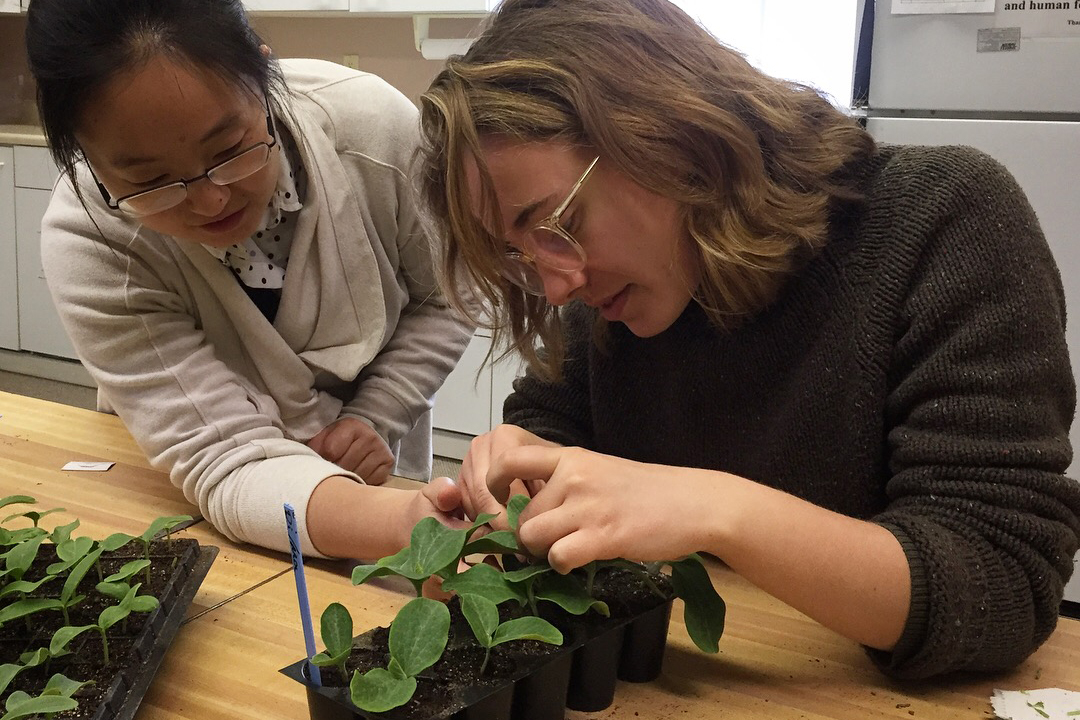 Horticultural Specialist Wenjing Guan shows White Violet Center intern, Liv Charlton, how to graft a cucumber scion to a squash root. (Candace MInster/WVCEJ)