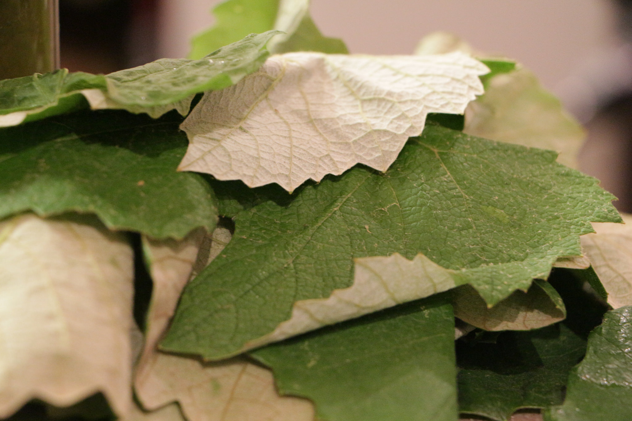 Preserving Grape Leaves Earth Eats Real Food Green Living Indiana Public Media