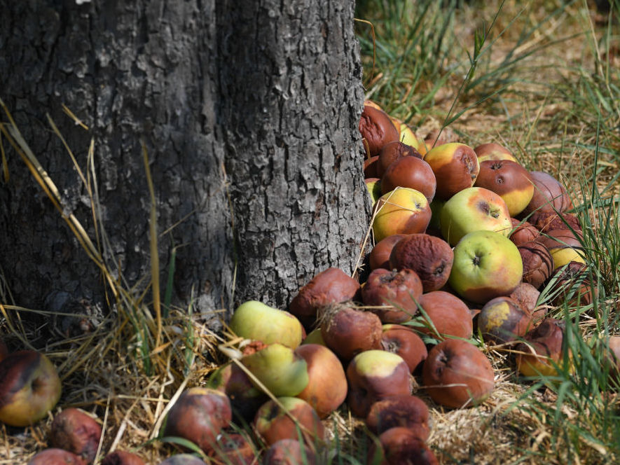 Thanks to ethylene, onebad apple spoils the lot. (Arne Dedert/Getty Images)
