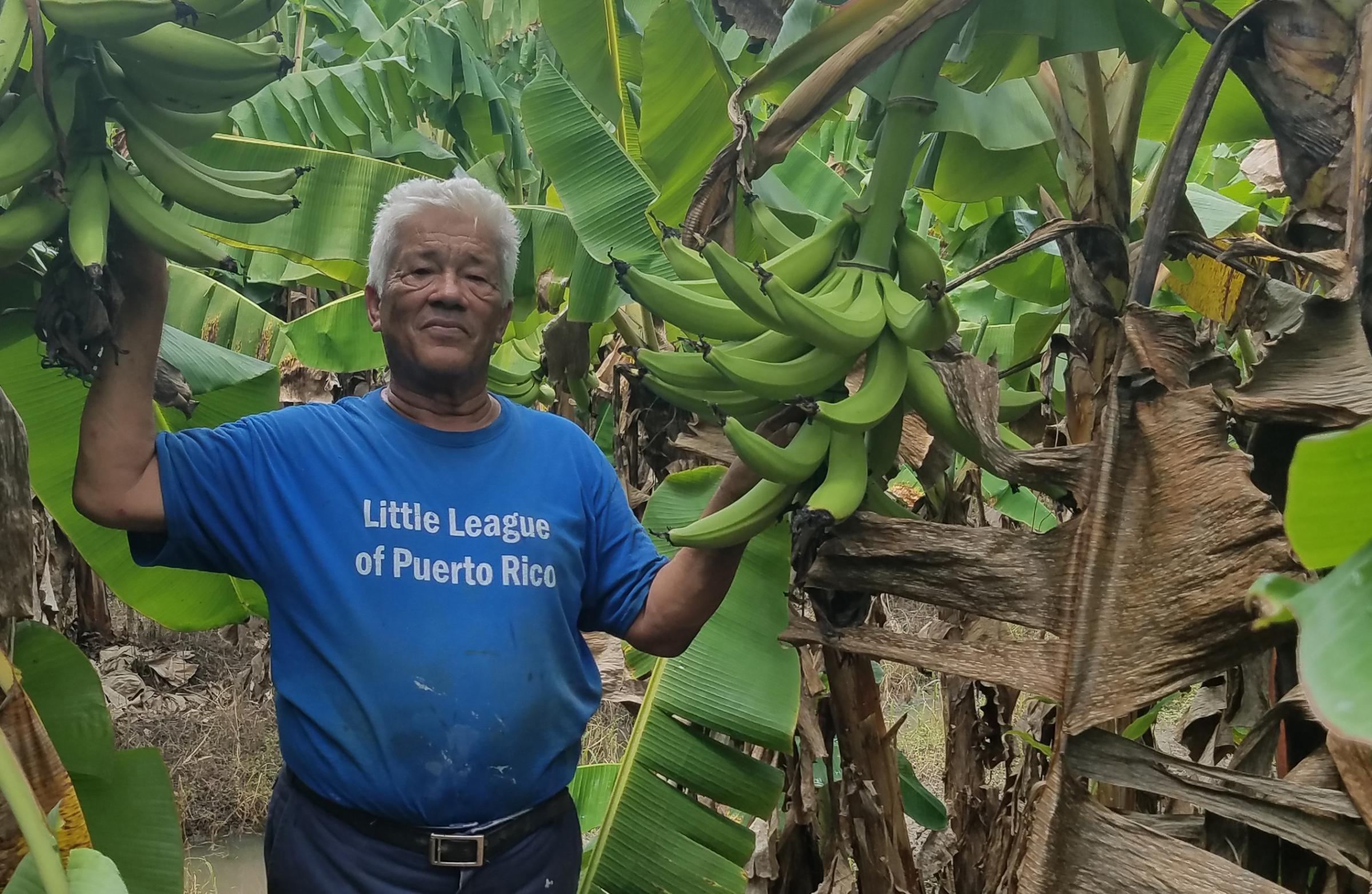 """Luis Pinto lost about $300,000 worth of plantain trees, livestock, roads and fences on his farm near Yabucoa, Puerto Rico. """"When I saw the desctruction, I just cried. But I said, 'The show must go on,'"""" he says. (ALLISON KEYES/NETNEBRASK/FERN)"""