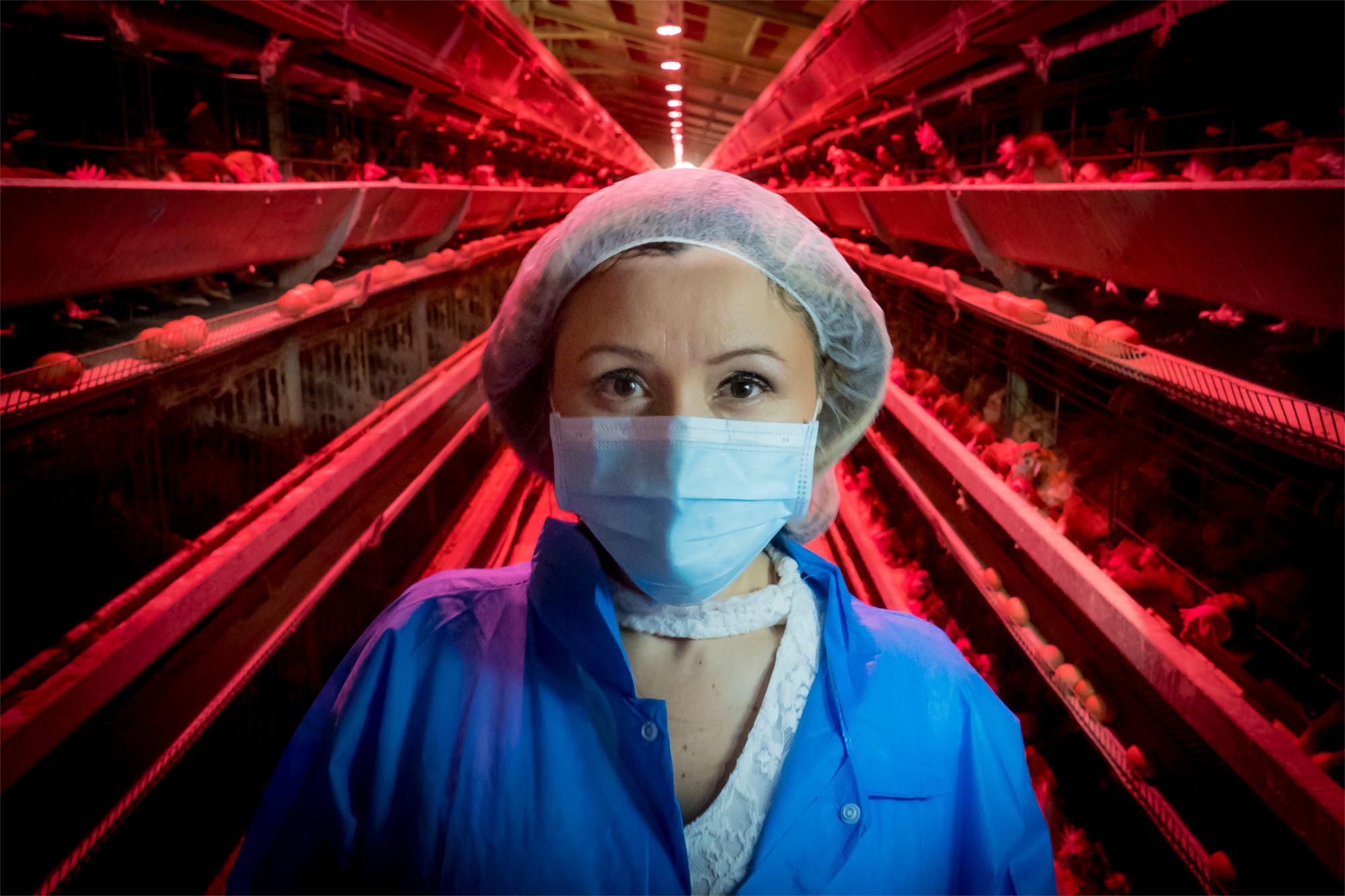 Janice Deynes operates an egg production facility in in San Sebastian, Puerto Rico that uses simulated sunlight to promote production. Reforms to livestock treatment in 2018 had both wins and losses. (Preston Keres/USDA)