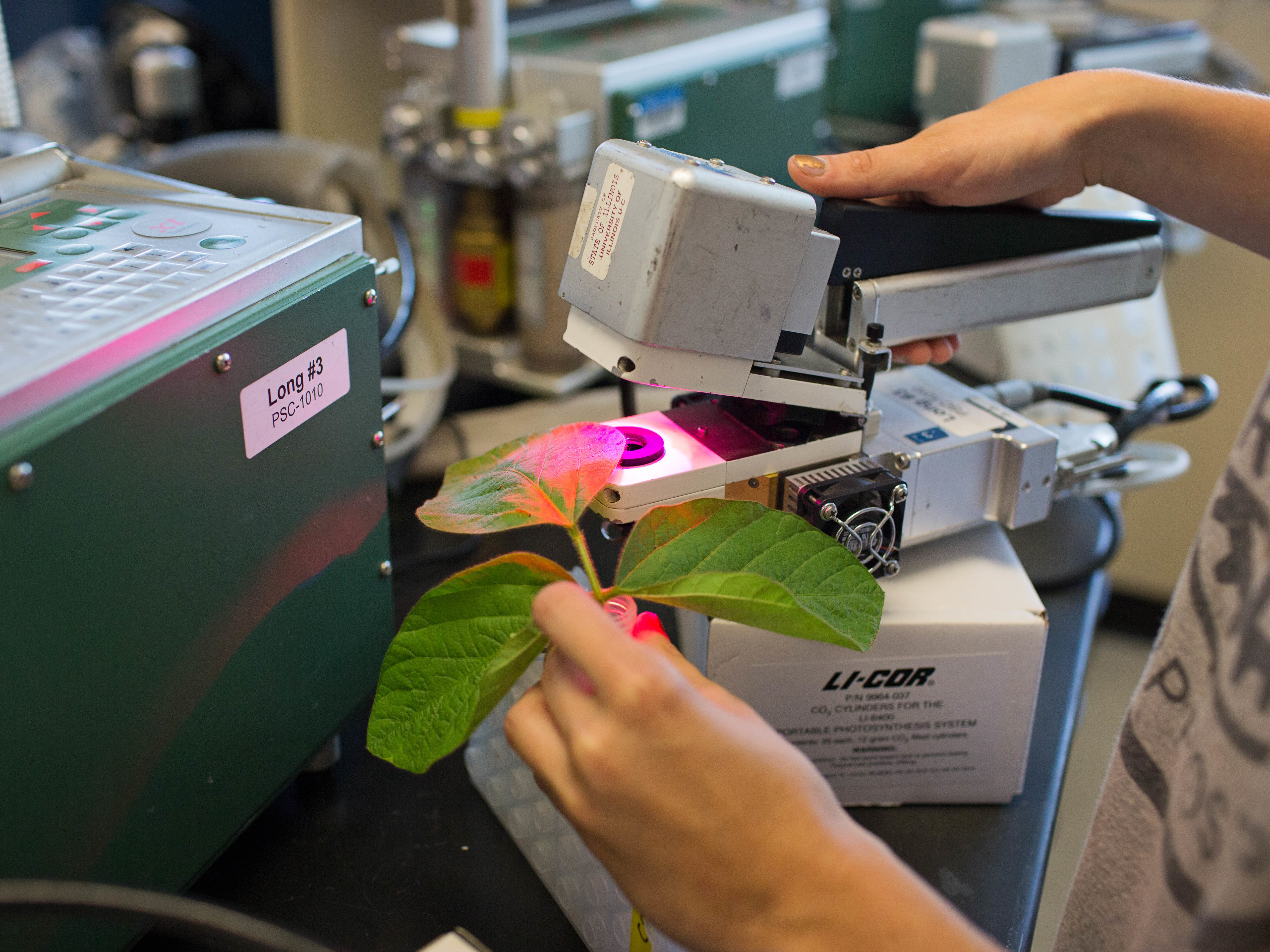 Scientists have re-engineered photosynthesis, the foundation of life on Earth, creating genetically modified plants that grow faster and bigger. Above, scientists measure how well modified tobacco plants photosynthesize compared to unmodified plants. (Haley Ahlers/RIPE Project)